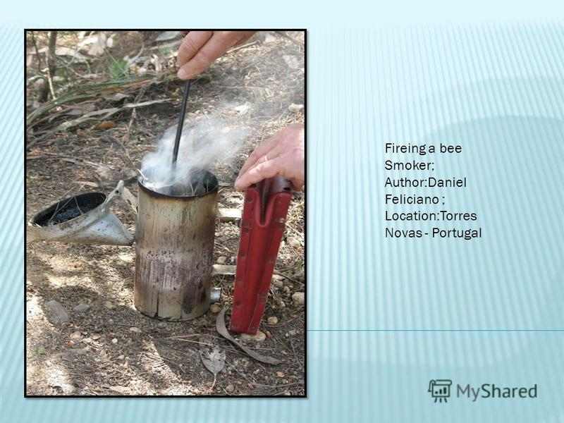 Fireing a bee Smoker; Author:Daniel Feliciano ; Location:Torres Novas - Portugal