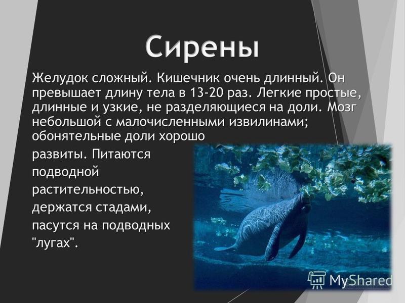 Желудок сложный. Кишечник очень длинный. Он превышает длину тела в 13-20 раз. Легкие простые, длинные и узкие, не разделяющиеся на доли. Мозг небольшой с малочисленными извилинами; обонятельные доли хорошо развиты. Питаются подводной растительностью,