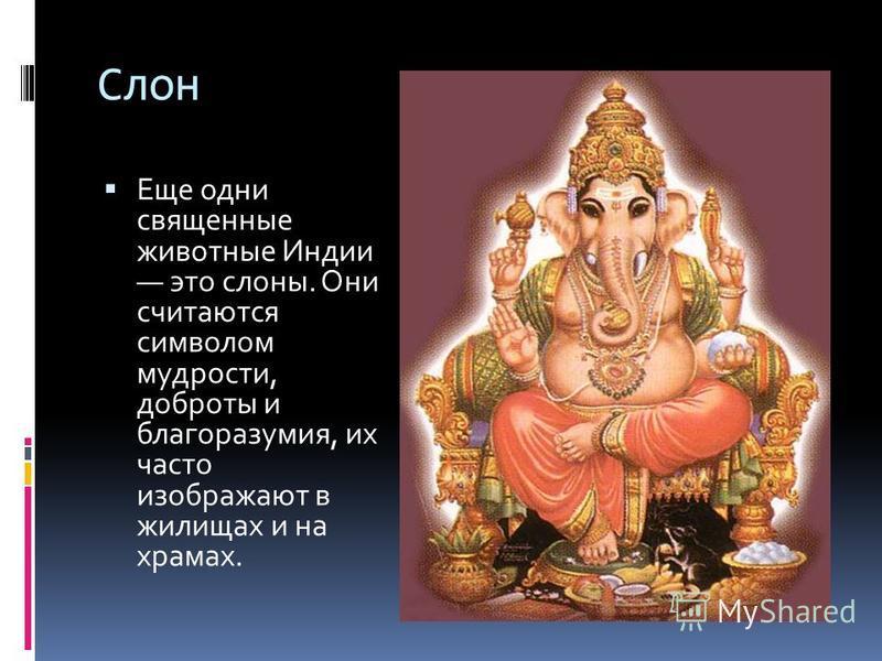 Слон Еще одни священные животные Индии это слоны. Они считаются символом мудрости, доброты и благоразумия, их часто изображают в жилищах и на храмах.