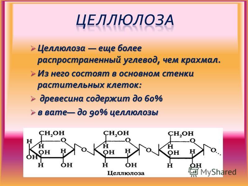 Целлюлоза еще более распространенный углевод, чем крахмал. Целлюлоза еще более распространенный углевод, чем крахмал. Из него состоят в основном стенки растительных клеток: Из него состоят в основном стенки растительных клеток: древесина содержит до