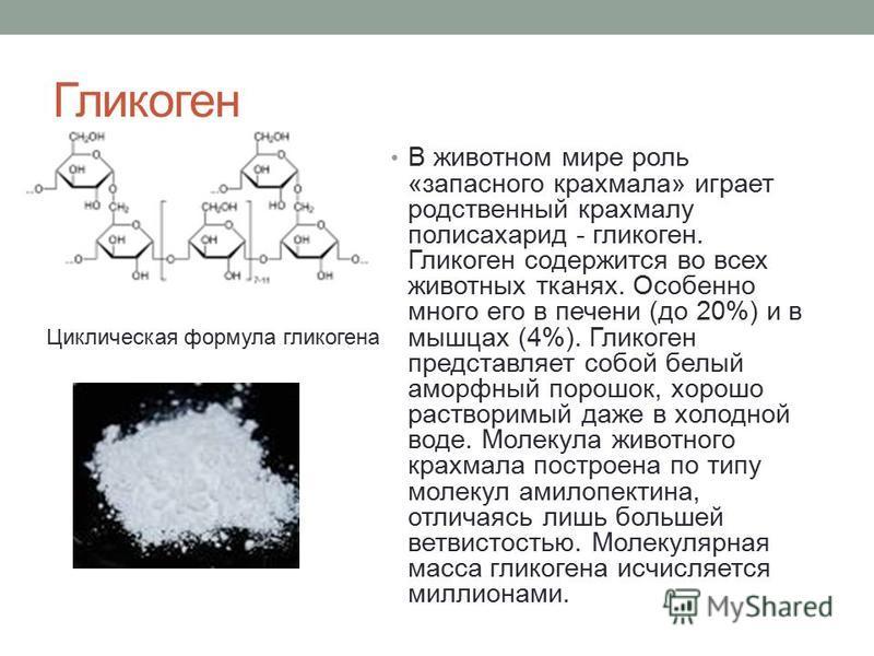 Гликоген В животном мире роль «запасного крахмала» играет родственный крахмалу полисахарид - гликоген. Гликоген содержится во всех животных тканях. Особенно много его в печени (до 20%) и в мышцах (4%). Гликоген представляет собой белый аморфный порош