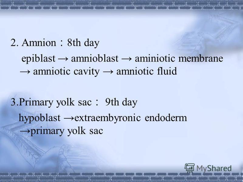 Bilaminar germ disc Epiblast Hypoblast Columnar cells Cuboidal cells Epiblast Hypoblast