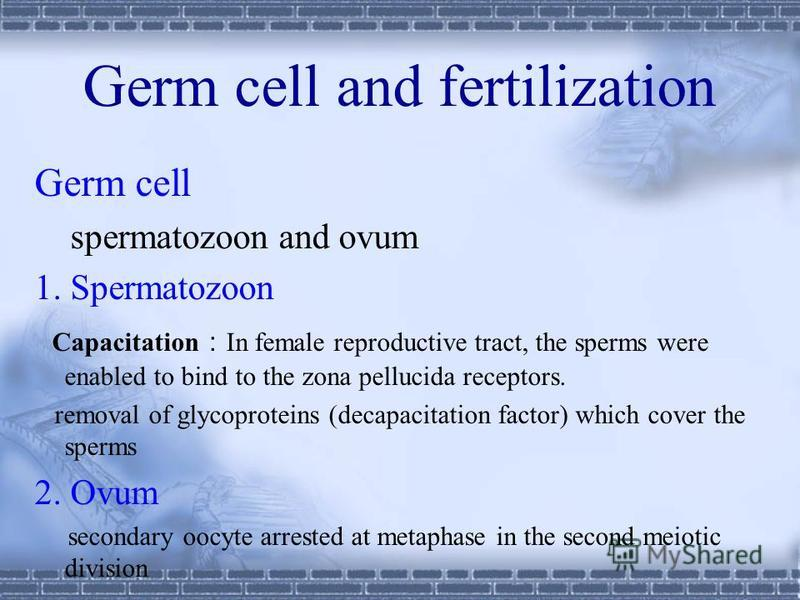 Preembryonic period: 1st week to end of 2nd week fertilization to formation of bilaminar germ disc Embryonic period : 3rd week to end of 8th week formation of embryo Fetal period: 9th week to birth growth Perinatal stage: 26th week to 4 week after bi