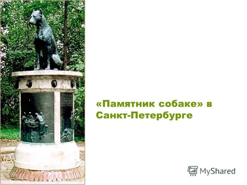 «Памятник собаке» в Санкт-Петербурге