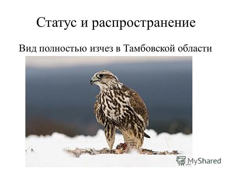 Статус и распространение Вид полностью исчез в Тамбовской области