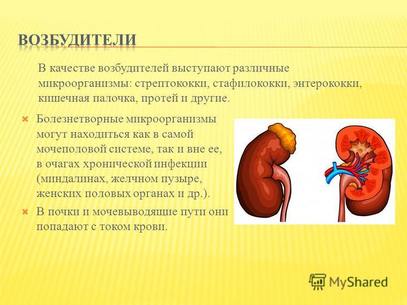 Болезнетворные микроорганизмы могут находиться как в самой мочеполовой системе, так и вне ее, в очагах хронической инфекции (миндалинах, желчном пузыре, женских половых органах и др.). В почки и мочевыводящие пути они попадают с током крови. В качест