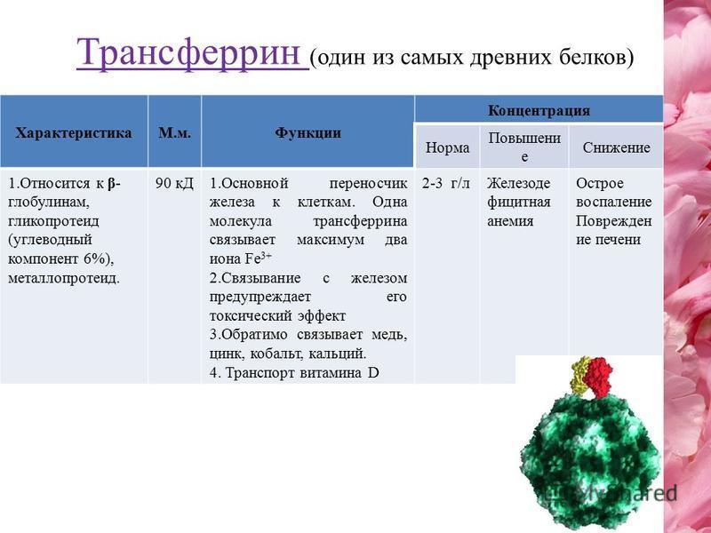 Трансферрин (один из самых древних белков) ХарактеристикаМ.м.Функции Концентрация Норма Повышени е Снижение 1. Относится к β- глобулинам, гликопротеид (углеводный компонент 6%), металлопротеид. 90 кД1. Основной переносчик железа к клеткам. Одна молек