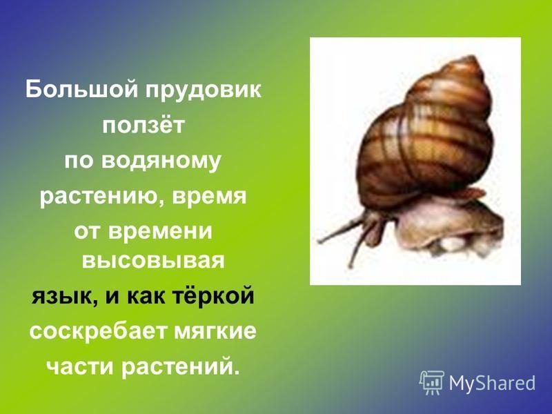 Бабочки, мухи, комары- эти насекомые могут питаться только жидкой пищей, всасывая её хоботком.
