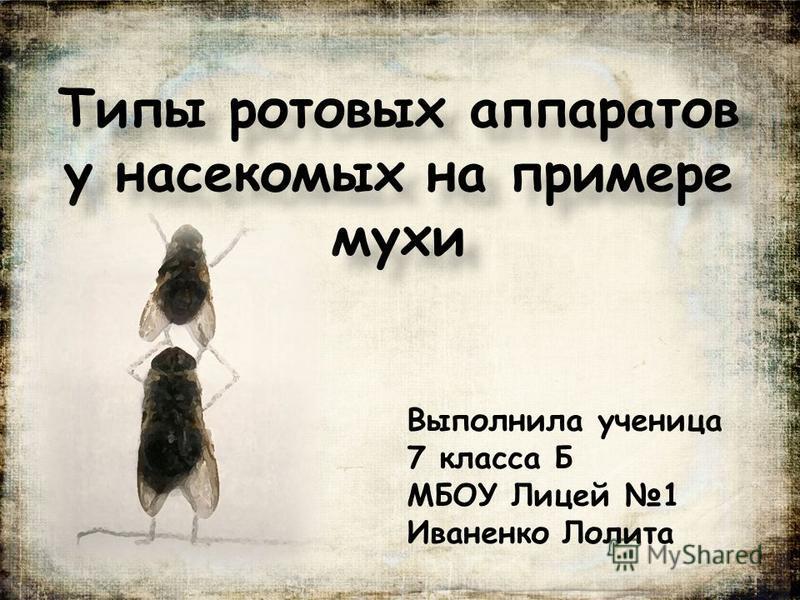 Типы ротовых аппаратов у насекомых на примере мухи Выполнила ученица 7 класса Б МБОУ Лицей 1 Иваненко Лолита