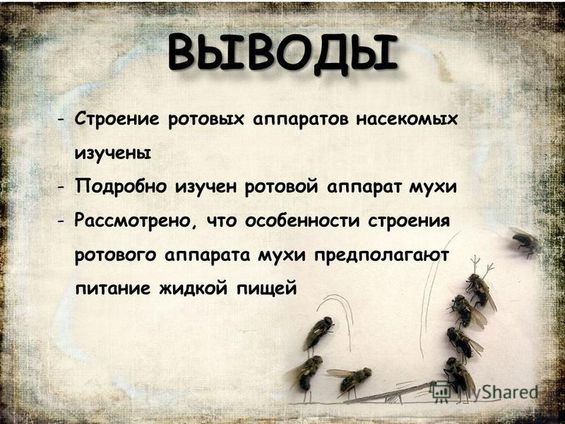 ВЫВОДЫВЫВОДЫ -Строение ротовых аппаратов насекомых изучены -Подробно изучен ротовой аппарат мухи -Рассмотрено, что особенности строения ротового аппарата мухи предполагают питание жидкой пищей