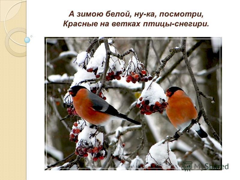 А зимою белой, ну-ка, посмотри, Красные на ветках птицы-снегири.