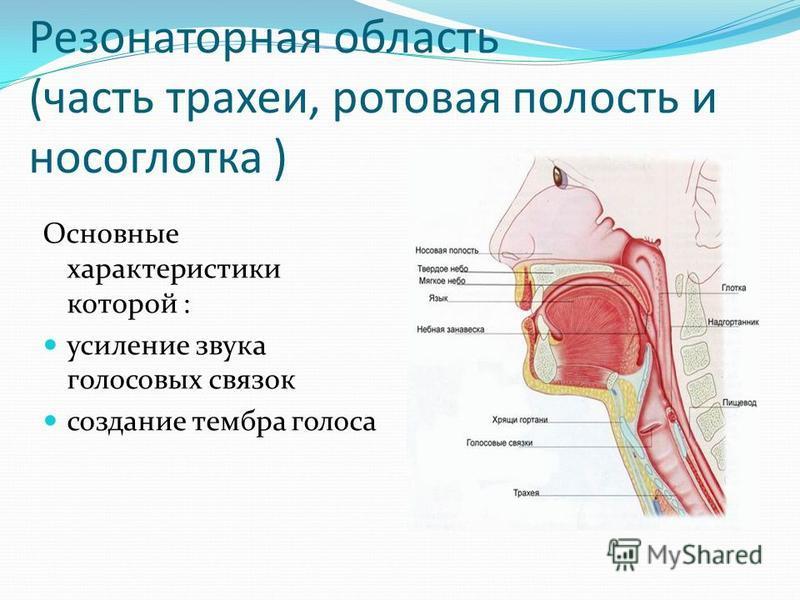 Резонаторная область (часть трахеи, ротовая полость и носоглотка ) Основные характеристики которой : усиление звука голосовых связок создание тембра голоса