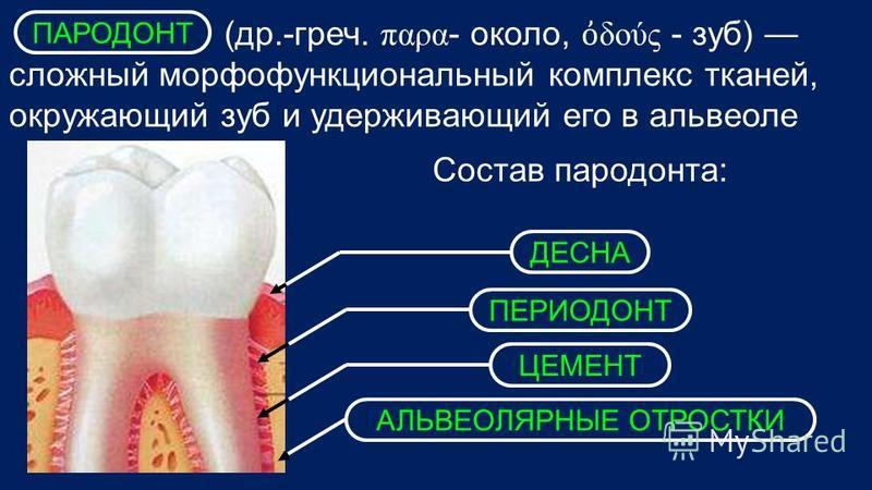 (др.-греч. παρα - около, δούς - зуб) сложный морфофункциональный комплекс тканей, окружающий зуб и удерживающий его в альвеоле Состав пародонта: ДЕСНА ПЕРИОДОНТ ЦЕМЕНТ АЛЬВЕОЛЯРНЫЕ ОТРОСТКИ ПАРОДОНТ