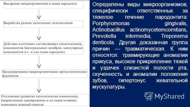 Определены виды микроорганизмов, специфически ответственных за тяжелое течение пародонтита: Porphyromonas gingivalis, Actinobacillus actinomycetemcomitans, Prevotella intermedia, Treponema denticola. Другая доказанная группа причин травматическая. К