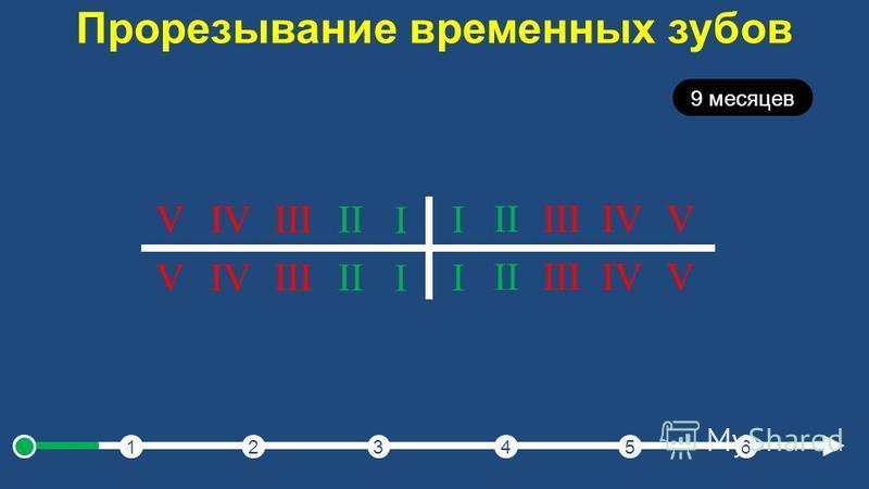 Прорезывание временных зубов 123456 9 месяцев I IIIIIIVV I IIIIIIVV I IIIIIIVV I IIIIIIVV