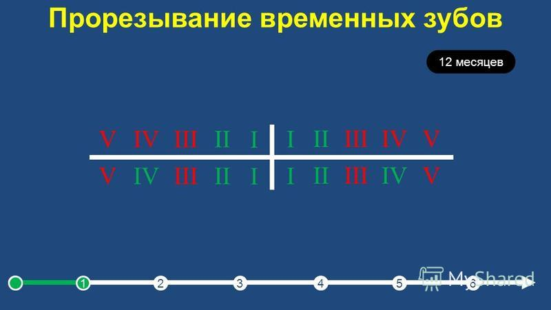 Прорезывание временных зубов 12 месяцев I IIIIIIVV I IIIIIIVV I IIIIIIVV I IIIIIIVV 123456