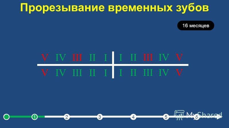 Прорезывание временных зубов 16 месяцев I IIIIIIVV I IIIIIIVV I IIIIIIVV I IIIIIIVV 123456
