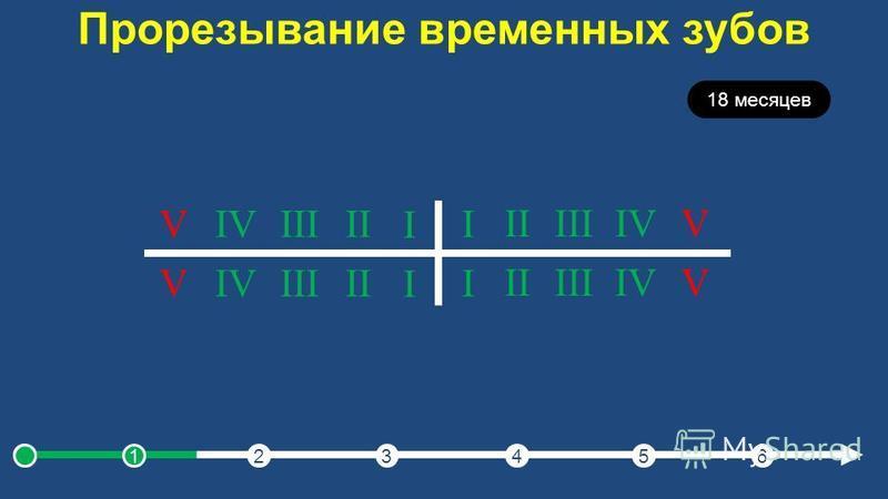 Прорезывание временных зубов 18 месяцев I IIIIIIVV I IIIIIIVV I IIIIIIVV I IIIIIIVV 123456