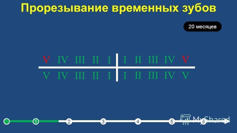 Прорезывание временных зубов 20 месяцев I IIIIIIVV I IIIIIIVV I IIIIIIVV I IIIIIIVV 123456