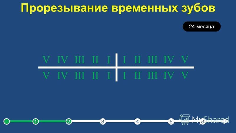 Прорезывание временных зубов 24 месяца I IIIIIIVV I IIIIIIVV I IIIIIIVV I IIIIIIVV 123456