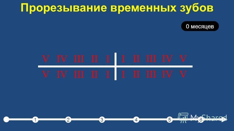 Прорезывание временных зубов 123456 0 месяцев I IIIIIIVV I IIIIIIVV I IIIIIIVV I IIIIIIVV