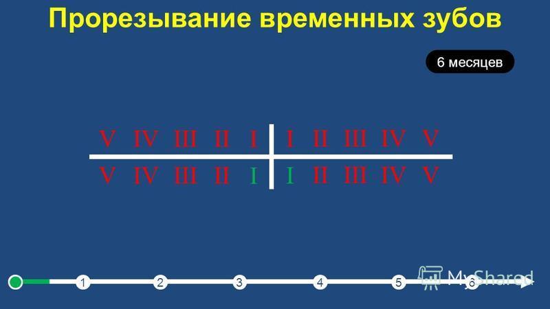 Прорезывание временных зубов 123456 6 месяцев I IIIIIIVV I IIIIIIVV I IIIIIIVV I IIIIIIVV