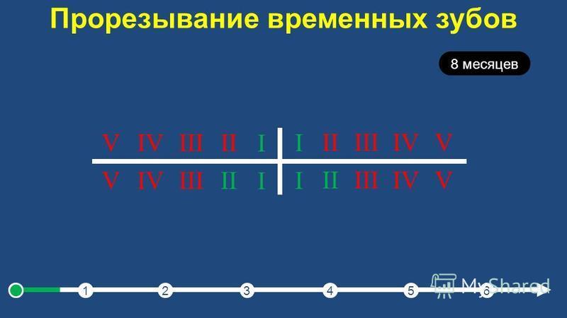 Прорезывание временных зубов 123456 8 месяцев I IIIIIIVV I IIIIIIVV I IIIIIIVV I IIIIIIVV