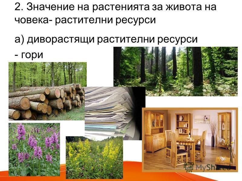 2. Значение на растенията за живота на човека- растителни ресурси а) диворастящи растителни ресурси - гори