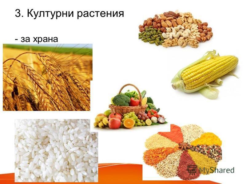3. Културни растения - за храна