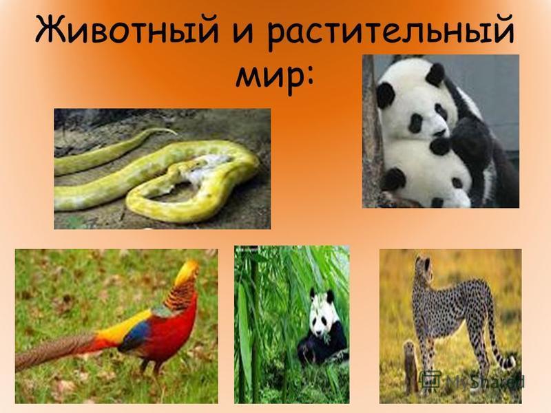 Животный и растительный мир:
