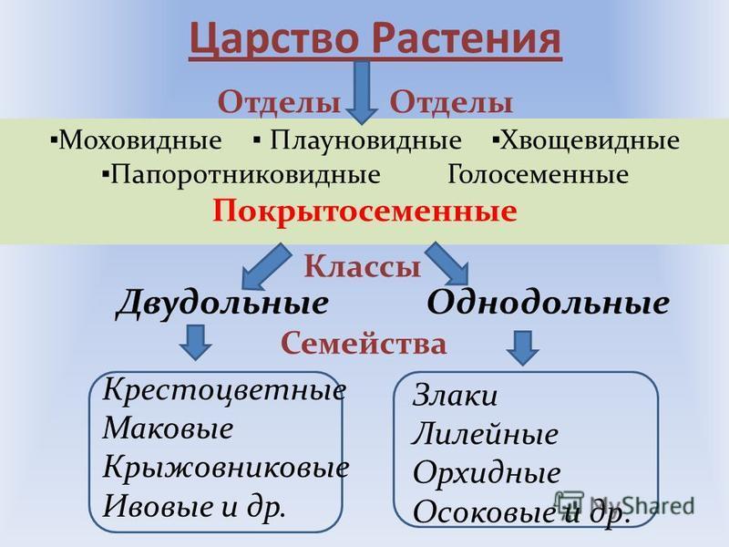 Основные систематические категории растений. Царство Отдел Класс Семейство Род Вид царство отдел класс семейство род вид