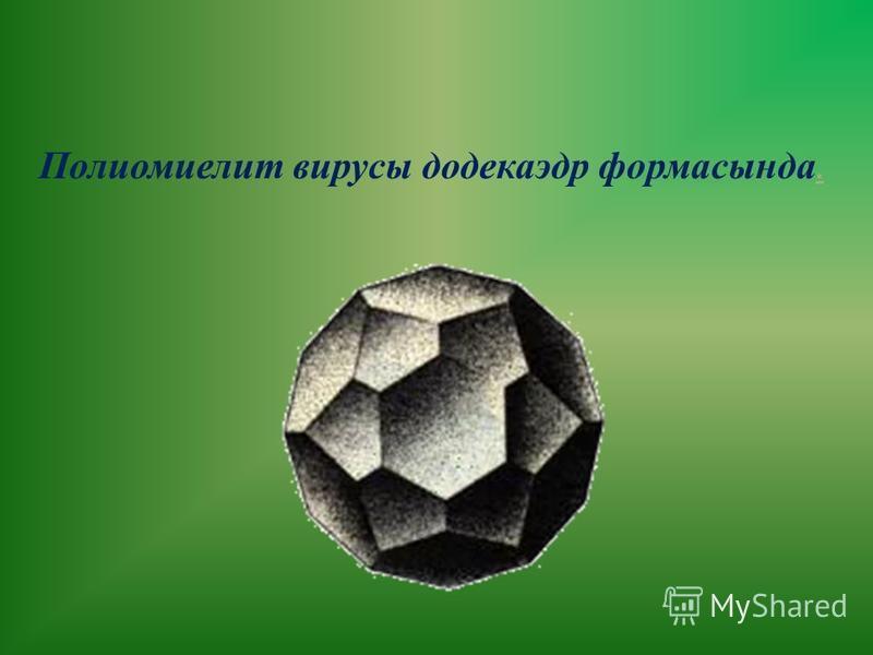 Полиомиелит вирусы додекаэдр формасында.