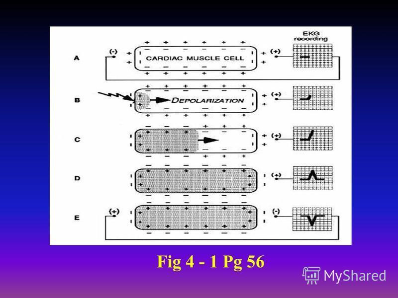 Fig 4 - 1 Pg 56