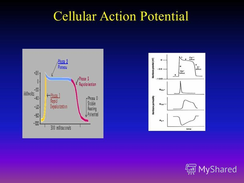 Cellular Action Potential