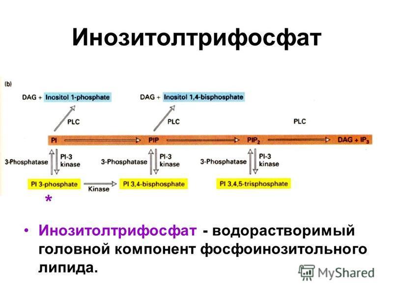 Инозитолтрифосфат Инозитолтрифосфат - водорастворимый головной компонент фосфоинозитольного липида. *