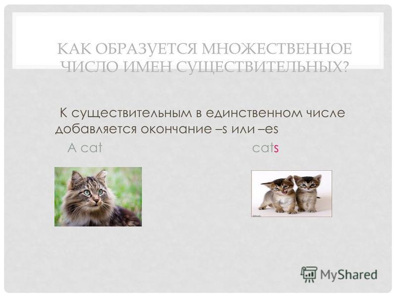 КАК ОБРАЗУЕТСЯ МНОЖЕСТВЕННОЕ ЧИСЛО ИМЕН СУЩЕСТВИТЕЛЬНЫХ? К существительным в единственном числе добавляется окончание –s или –es A cat cats