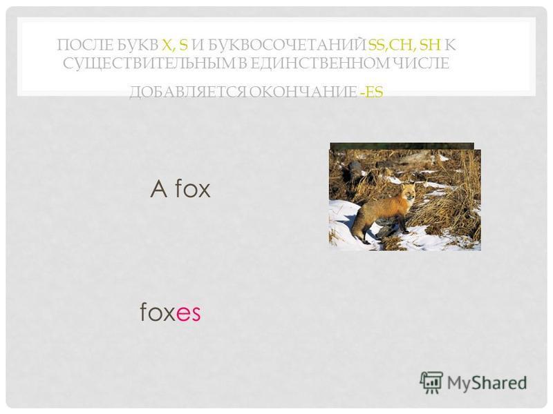 ПОСЛЕ БУКВ X, S И БУКВОСОЧЕТАНИЙ SS,CH, SH К СУЩЕСТВИТЕЛЬНЫМ В ЕДИНСТВЕННОМ ЧИСЛЕ ДОБАВЛЯЕТСЯ ОКОНЧАНИЕ -ES A fox foxes