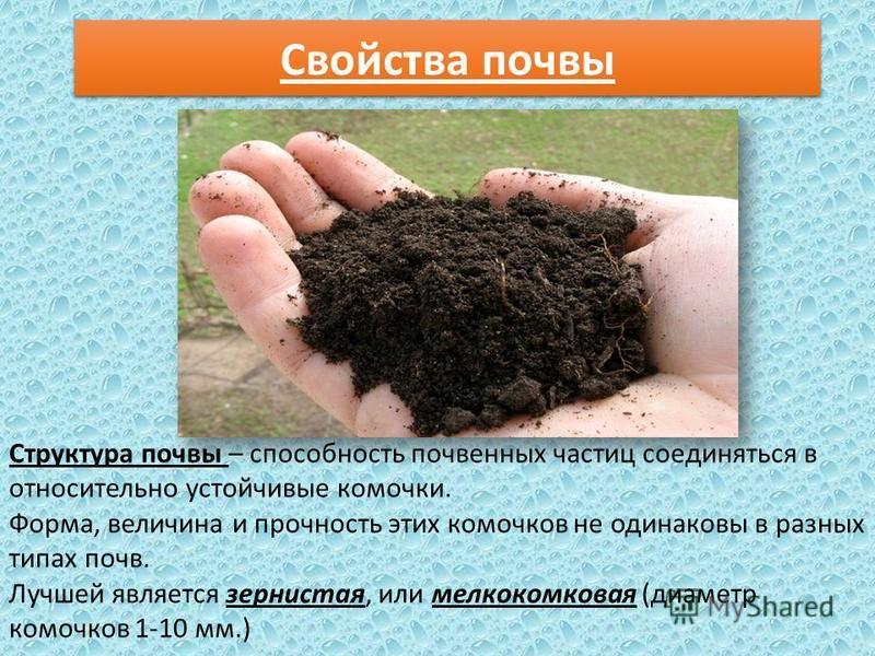 Свойства почвы Структура почвы – способность почвенных частиц соединяться в относительно устойчивые комочки. Форма, величина и прочность этих комочков не одинаковы в разных типах почв. Лучшей является зернистая, или мелкокомковая (диаметр комочков 1-