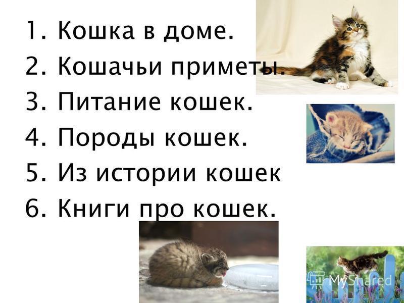 1. Кошка в доме. 2. Кошачьи приметы. 3. Питание кошек. 4. Породы кошек. 5. Из истории кошек 6. Книги про кошек.