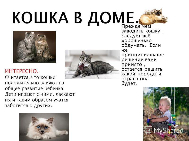 КОШКА В ДОМЕ. Прежде чем заводить кошку, следует всё хорошенько обдумать. Если же принципиальное решение вами принято, остаётся решить какой породы и окраса она будет. ИНТЕРЕСНО. Считается, что кошки положительно влияют на общее развитие ребёнка. Дет