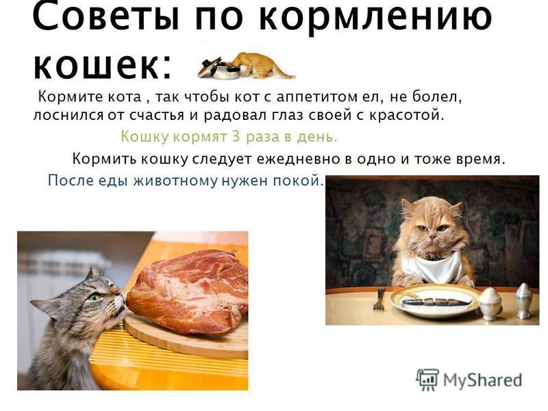 Советы по кормлению кошек: Кормите кота, так чтобы кот с аппетитом ел, не болел, лоснился от счастья и радовал глаз своей с красотой. Кошку кормят 3 раза в день. Кормить кошку следует ежедневно в одно и тоже время. После еды животному нужен покой.