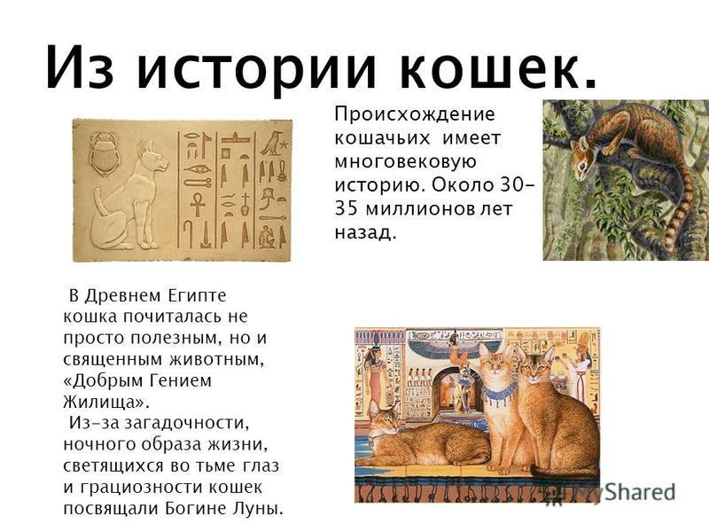 Из истории кошек. Происхождение кошачьих имеет многовековую историю. Около 30- 35 миллионов лет назад. В Древнем Египте кошка почиталась не просто полезным, но и священным животным, «Добрым Гением Жилища». Из-за загадочности, ночного образа жизни, св