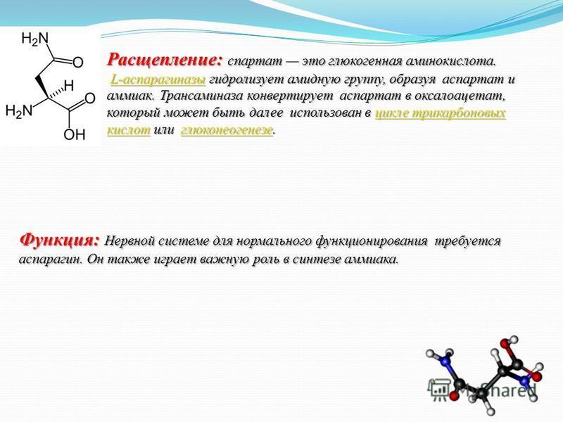 Расщепление: спартат это глюкогенная аминокислота. L-аспарагиназы гидролизует амидную группу, образуя аспартат и аммиак. Трансаминаза конвертирует аспартат в оксалоацетат, который может быть далее использован в цикле трикарбоновых кислот или глюконео