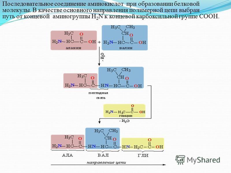 Последовательное соединение аминокислот при образовании белковой молекулы. В качестве основного направления полимерной цепи выбран путь от концевой аминогруппы H 2 N к концевой карбоксильной группе COOH.