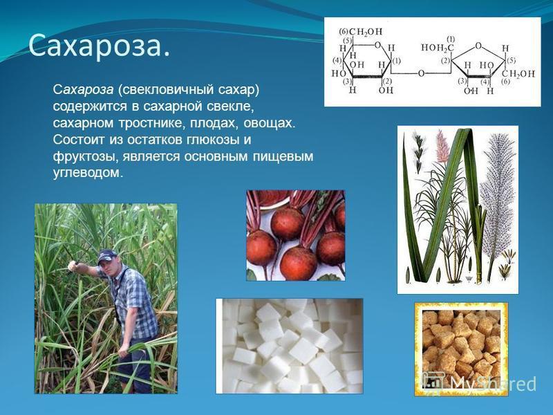 Сахароза. Сахароза (свекловичный сахар) содержится в сахарной свекле, сахарном тростнике, плодах, овощах. Состоит из остатков глюкозы и фруктозы, является основным пищевым углеводом.