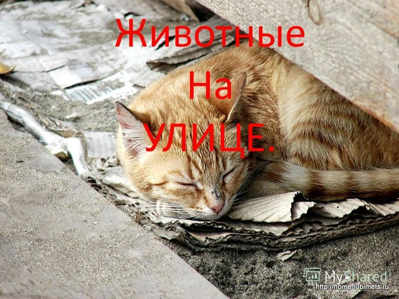 Животные На УЛИЦЕ.