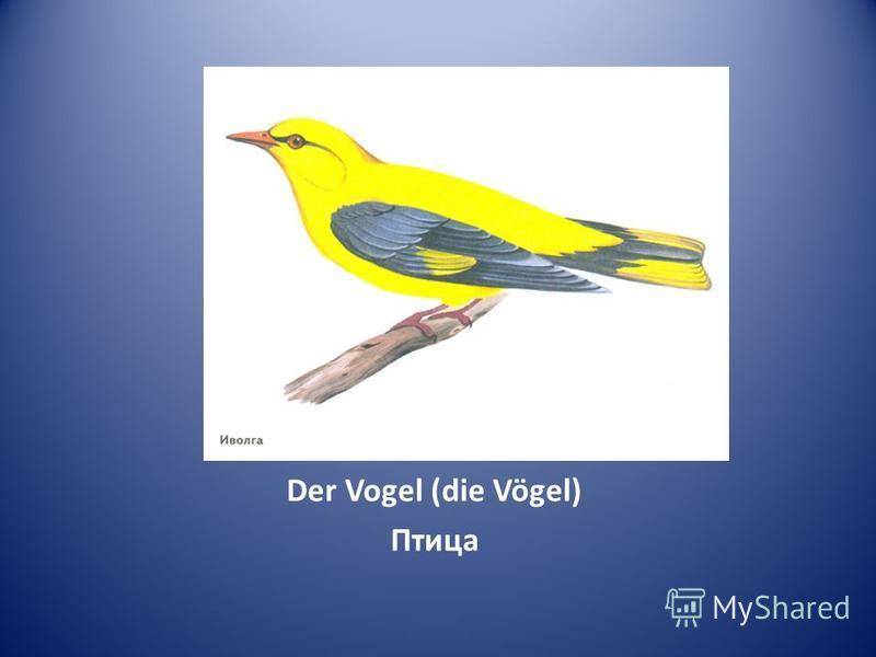 Der Vogel (die Vögel) Птица