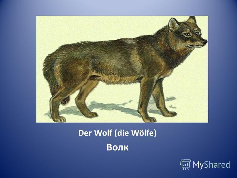 Der Wolf (die Wölfe) Волк