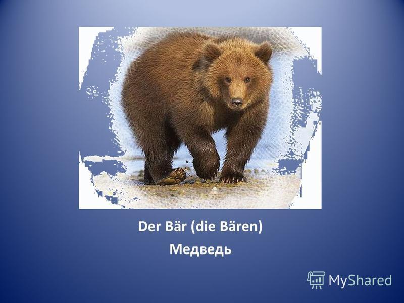 Der Bär (die Bären) Медведь