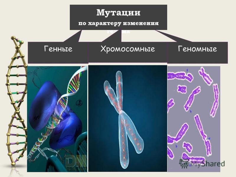 Мутации по характеру изменения генома Хромосомные Генные Геномные